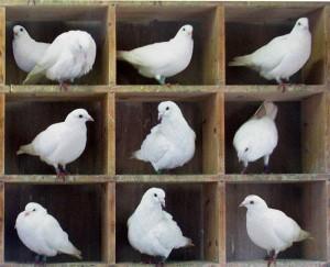 [cml_media_alt id='219']Dieci piccioni in nove caselle[/cml_media_alt]